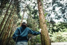 Domtar Joins American Forest Foundation's Family Forest Carbon Program Image