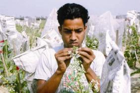 Increasing Food Security Through Improved Seed Quality in Bangladesh Image