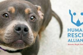 Subaru of America Helps Pets in Need Find Homes During 2019 Washington Auto Show Image