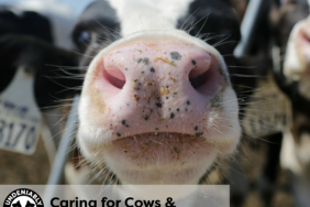 Undeniably Dairy: Caring for Cows and Nourishing Communities Image