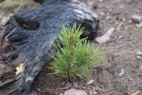 National Forest Foundation Launches Ambitious Effort to Plant 50 Million Trees Image