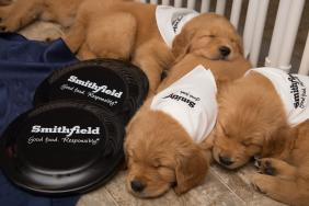 Smithfield Foods Supports Veterans with $25,000 Contribution to Warrior Canine Connection Image