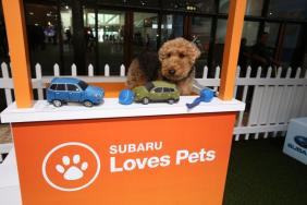 Subaru of America Expands Pet Adoptions to More Than 40 National Auto Shows Nationwide Image