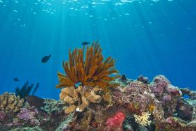 The Tiffany & Co. Foundation Commits $1 Million to Great Barrier Reef Conservation Efforts Image