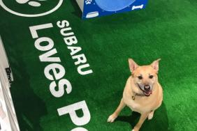 Subaru Hosts Event to Help Pets in Need During 2019 Chicago Auto Show Image