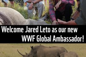 Academy Award Winning Actor Jared Leto Becomes WWF Global Ambassador Image