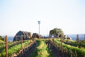 Jackson Family Wines Announces Progress on Land Conservation & Restoration Image