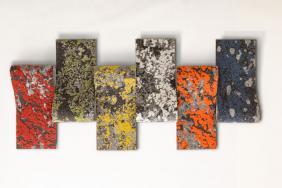 Mohawk Group's Lichen Wins Interior Design Best of Year Award for Modular Carpet Image