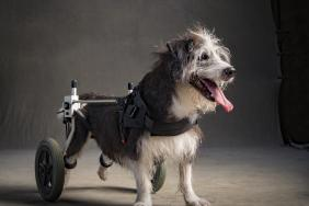 """Subaru of America Reaffirms Commitment to Pets in Need During October """"Subaru Loves Pets"""" Month and Establishes First-Ever """"National Make a Dog's Day"""" on October 22 Image"""