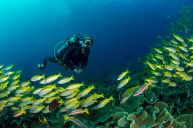 Alexandra Cousteau's Oceans 2050 Announces Landmark Study Concluding That Marine Life Can Be Rebuilt By 2050 Image