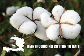 New Feasibility Study Sponsored By Timberland Makes Compelling Case for Bringing Cotton Farming Back to Haiti Image