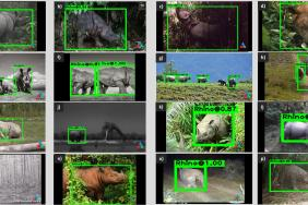 WildEyes ™ AI: Helping to Protect Wild Rhinos from Poachers and Track Species Recovery Image