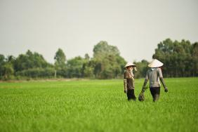 Olam Urges International Brands to Adopt New Rice Eco-label to Allow Consumers to Support Farmers and Promote Sustainable Rice Production  Image