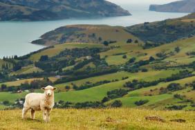 Responsible Wool Standard Promotes Sustainable Land Stewardship and Humane Sheep Treatment Image