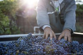 Jackson Family Wines Reaches 77% Certified Sustainable Vineyards Goal  Image