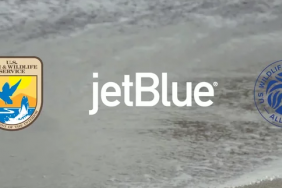 "JetBlue, U.S. Fish and Wildlife Service, U.S. Wildlife Trafficking Alliance Urge Customers to ""Buy Informed"" Image"