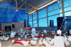 Tyson Foods and Cobb-Vantress Partner with OneEgg to Launch Sustainable Egg Farm in Haiti Image
