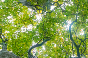 Trees, a Remarkable Innovation, the Unsung Heroes of Mitigating Climate Change Image