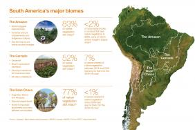 Cargill Highlights Progress Protecting South American Forests   Image