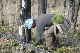 OneMain Financial Expands Partnership with National Forest Foundation to Plant 200,000 Trees Image