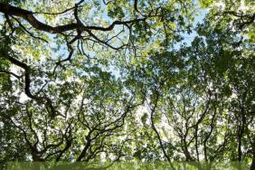 Texas Trees Foundation Announces New Dallas Urban Heat Island Effect Report and Findings, Sponsored by Alliance Data and Wells Fargo Image