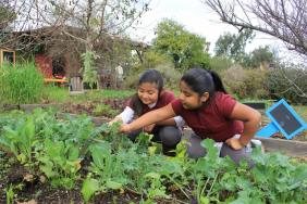 Whole Kids Foundation® Launches 2018 Growing Healthy Kids Campaign Image