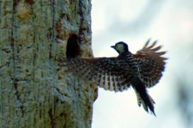 Landmark Forest Conservation Program on Pace to Restore and Protect More Than 540,000 Acres  Image