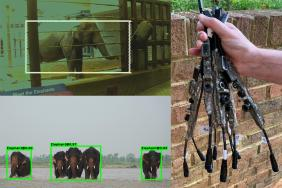 WildEyes™ AI: Helping to Save Wild Elephants and Prevent Human-Elephant Conflict Image