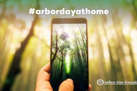 Arbor Day Foundation Launches Campaign to Celebrate Arbor Day at Home Image