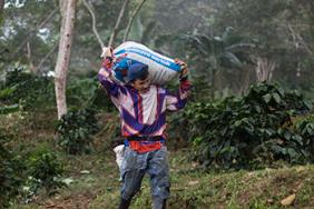 Fair Trade USA Calls on Consumers to Help Save Coffee Industry in Peril Image