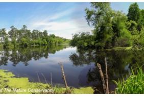 International Paper Joins Savannah River Clean Water Fund Image