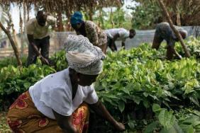 Hershey Announces Cocoa For Good, the Company's Half-Billion Dollar Sustainable Cocoa Strategy Image