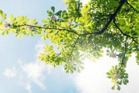 Tree City USA: Celebrating the Importance of Urban Tree Canopies Image