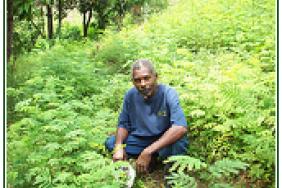 Haiti Tree Planting Will Slow Post-Earthquake Floods Image