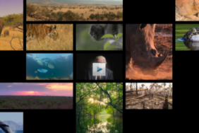 United Nations Development Programme Announces 'The Lion's Share' Fund With Founder Finch and Founding Partner Mars to Tackle Crisis in Wildlife Conservation and Animal Welfare Image