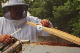 VIDEO | The Buzz on Beekeeping at Mohawk's Glasgow, VA Manufacturing Facility Image