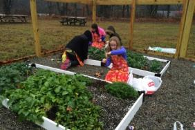 The Scotts Miracle-Gro Foundation Launches Grassroots Grants With KidsGardening to Bring Garden Benefits to More Children Image