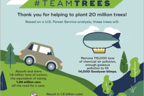 Arbor Day Foundation Announces Initial Planting Locations for 20 Million #TeamTrees Trees Image
