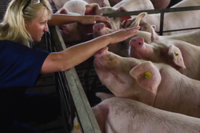 Smithfield Foods Releases Animal Care Section of 2017 Sustainability Report, New Virtual Reality Video of Hog Operations Image