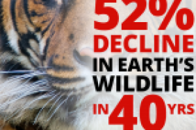 Half of Global Wildlife Lost, says new WWF Report Image