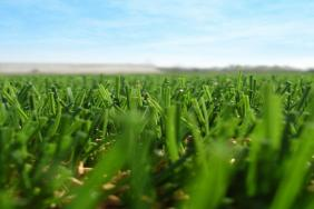 Organic Infill Replaces Car Tires in Turf Image