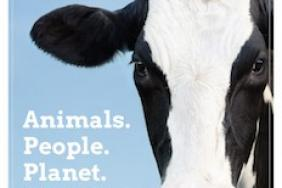 Aurora Organic Dairy Commits to 100% Carbon-Neutral Energy in Its Fourth Sustainability Report  Image