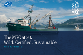 20 Years on 14% of Wild Seafood Engaged With the MSC Program Image