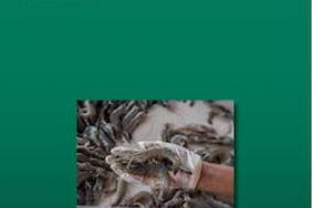 New BCG Reports: Shrimp Farmers Worldwide Must Adopt Sustainable Practices—or Risk Falling Behind Image