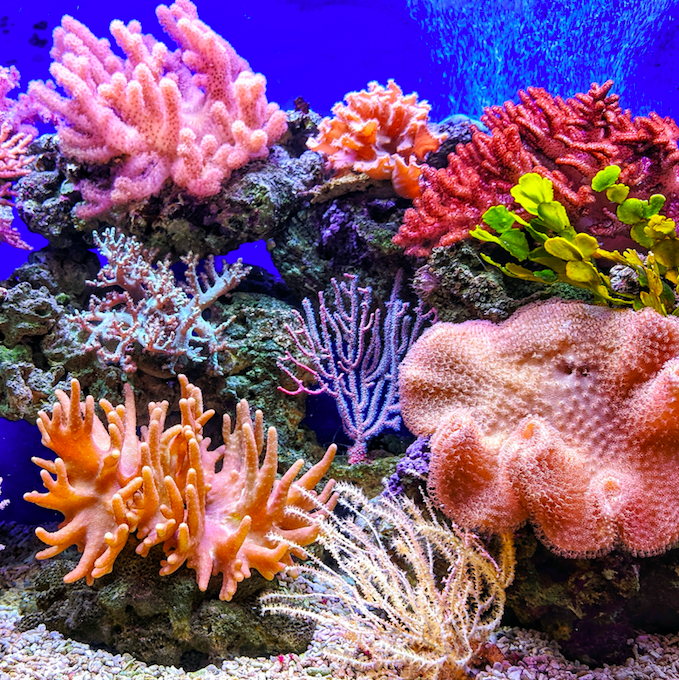 Coral Conservation
