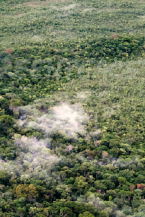A-conservation-area-in-Amazonas-state-Brazil-that-Greenpeace-says-is-under-threat.png