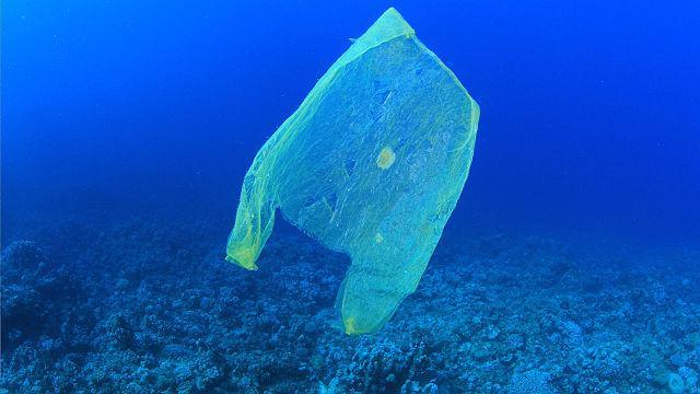 1682478-poster-1280-plasticbags.jpg