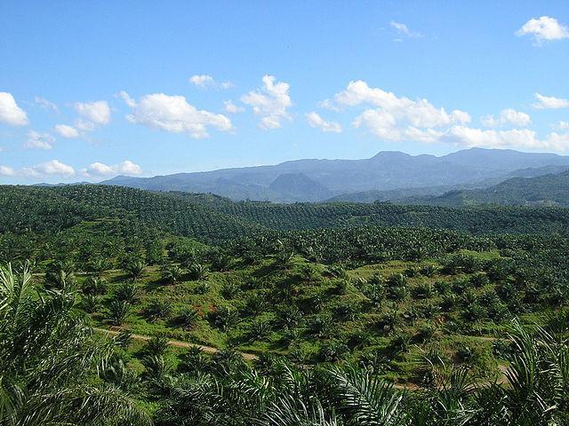 640px-Oil_palm_plantation_in_Cigudeg-03.jpg