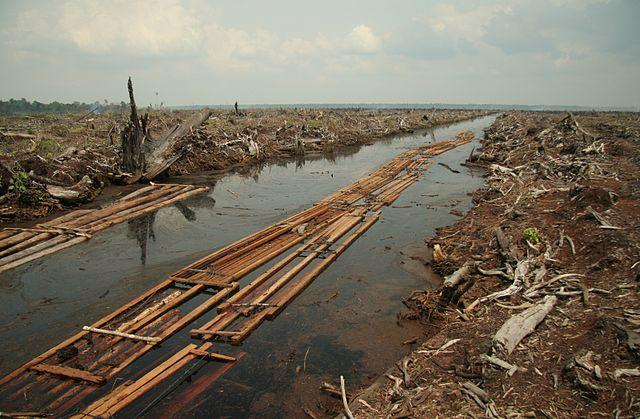 640px-Riau_deforestation_2006.jpg