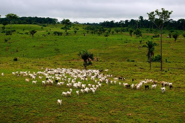 A-cattle-ranch-on-what-was-once-rain-forest-near-Rio-Branco-Brazil.jpg